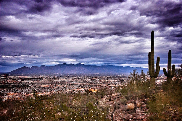 Sahuaro cactus standing guard over the Tucson Valley.