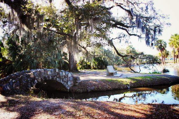 New Orleans City Park Oaks