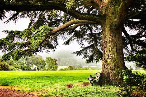 Pondering Spot at Highclere Castle