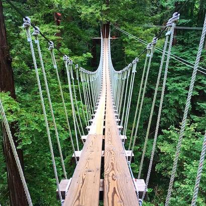 BlueSkyTraveler.com - Santa Cruz - Redwoods