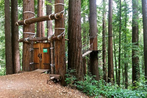 BlueSkyTraveler - Santa Cruz Redwoods